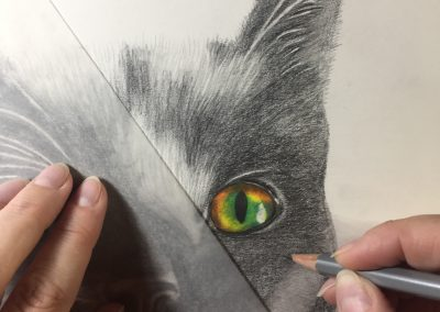 In Action, Cat in Graphite