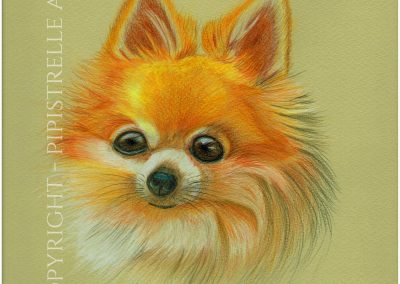 Busby - Cheeky Chihuahua Drawn with Caran D'Ache Prismalo Pencils