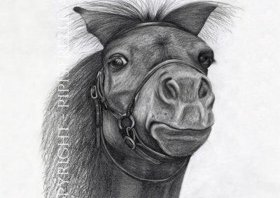 Feisty Filly Shetland Pony