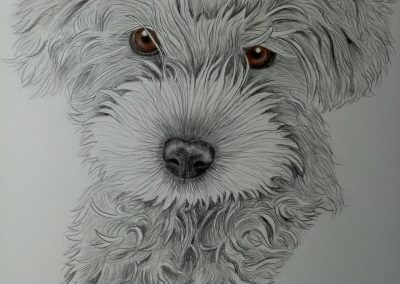 Pebbles - Graphite Dog Portrait