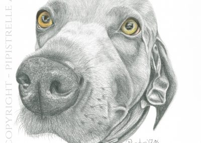 Lola Weimerana Caran D'Ache Graphite - eyes are drawn with polychromos pencils