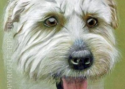 Paddy Weaton Terrier Drawn with Caran D'Ache Prismalo Pencils