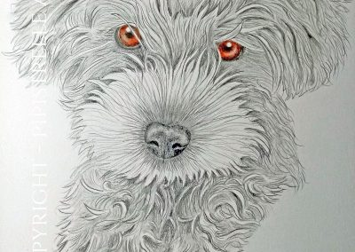 Pebbles the Puppy Caran D'Ache Graphite - eyes are drawn with polychromos pencils