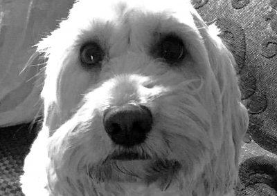 Phoebe Dog