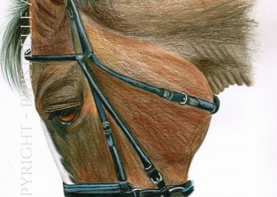 Polo Horse Drawn in Derwent Studio Pencils